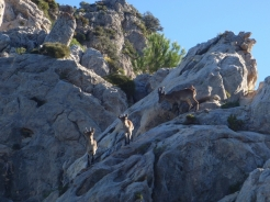 Aventura Malaga - Ibex